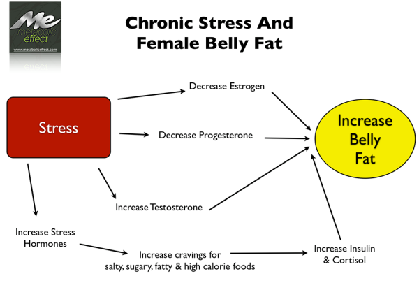 How Cortisol Affects Body Fat
